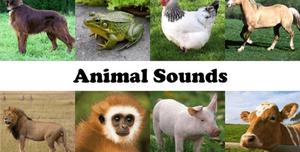 Animal Sound Ringtone App with Admob