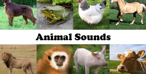 Animal Sound Ringtone App with Admob - CodeCanyon Item for Sale