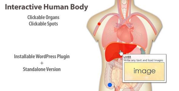 Interactive Human Body Organs Diagram - CodeCanyon Item for Sale